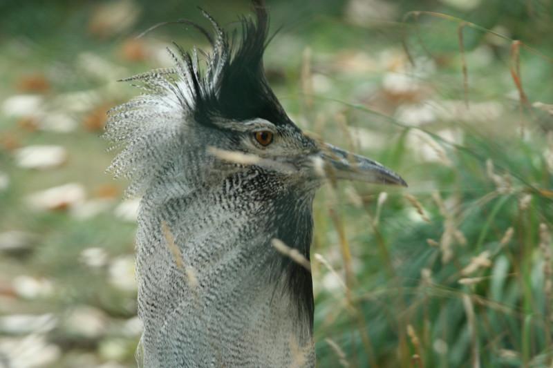 Birds080407_0025.JPG