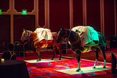 Horse Packing Contest 1-21-16