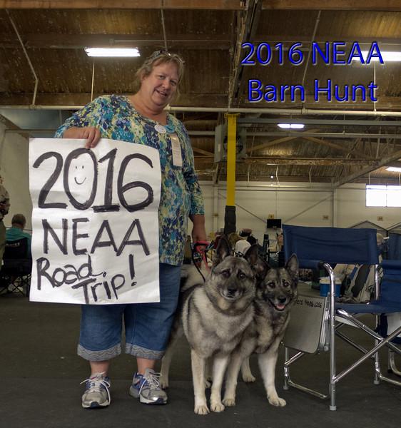 2016-06-11 SAT NEAA Barn Hunt
