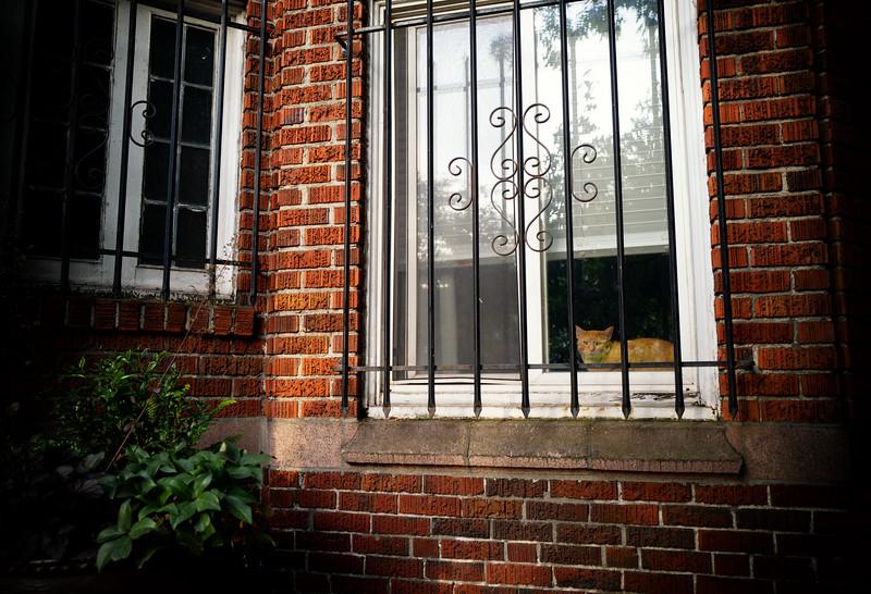 Cat in a window in Belltown