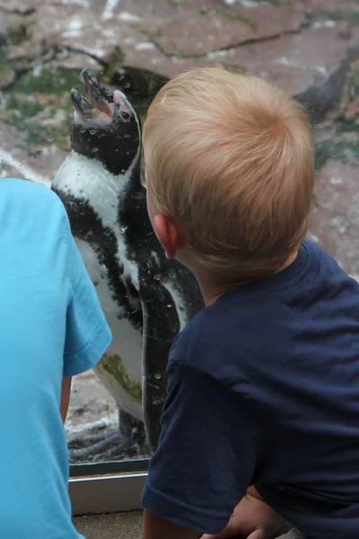 Boy talking to penguin...