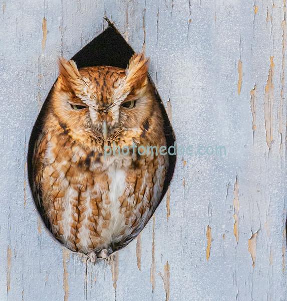 Owl,s