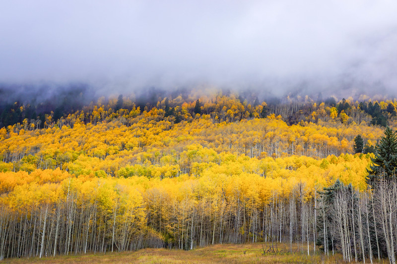 Fall_Aspen_Fog_Hank_Blum_Photography.jpg