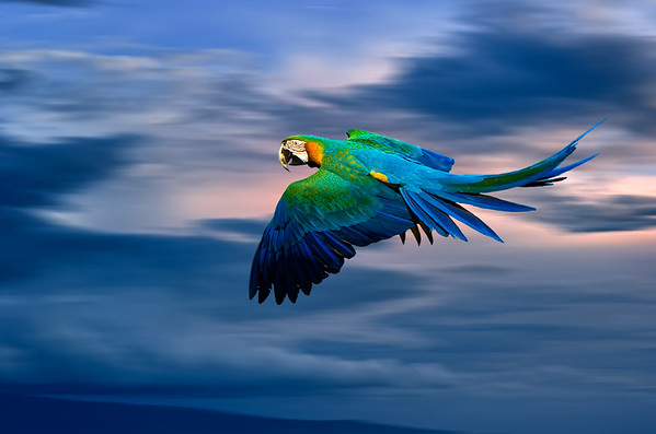 Flight of the Parrots