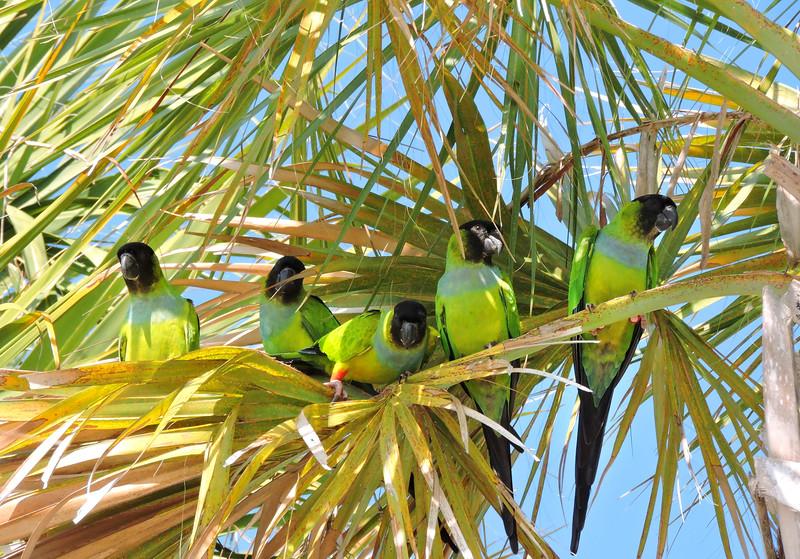 1_5_21 Parrots at Sunset Park.jpg