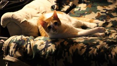 My Cats, My House, Tamaqua (8-25-2014)