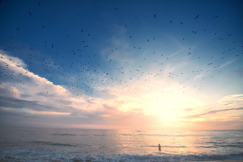 soaring birds on marine street