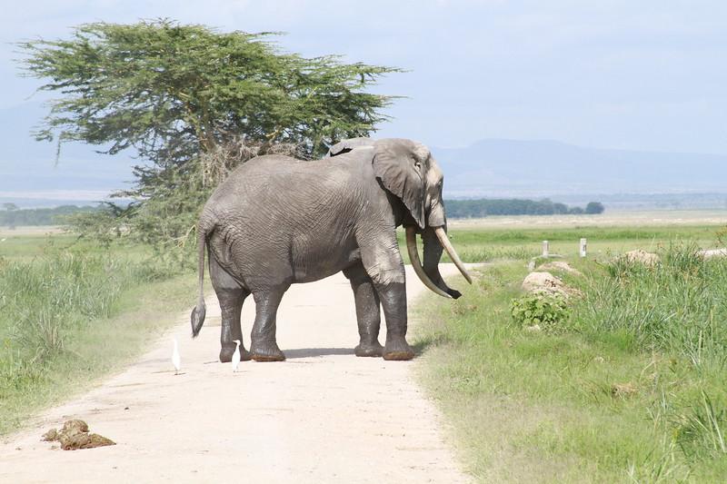 Kenya 2019 #2 879.JPG