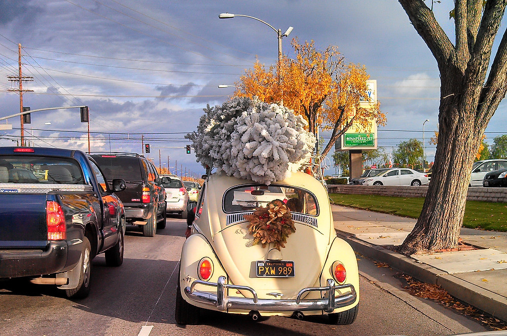 Description of . A family transports their Christmas tree on the top of their vintage Volkswagen Beetle in a residential neighborhood of Woodland Hills, California on Christmas Eve, December 24, 2012.  JOE KLAMAR/AFP/Getty Images