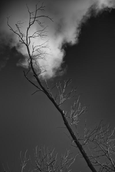 untitled-148-Edit.jpg