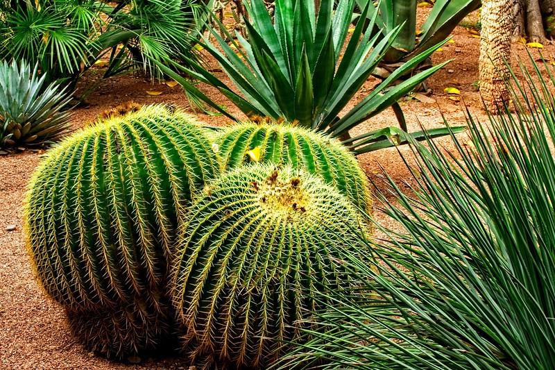 ysl garden morocco 2018 copy2.jpg