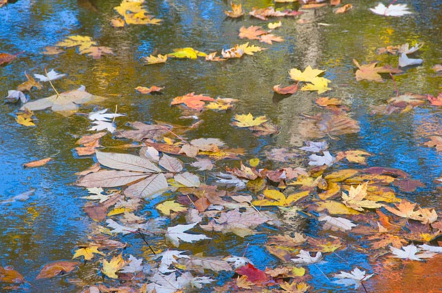 fall-medley.jpg