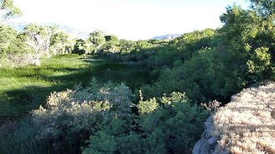 San Felipe Valley & Cuyamaca 6/20/2010