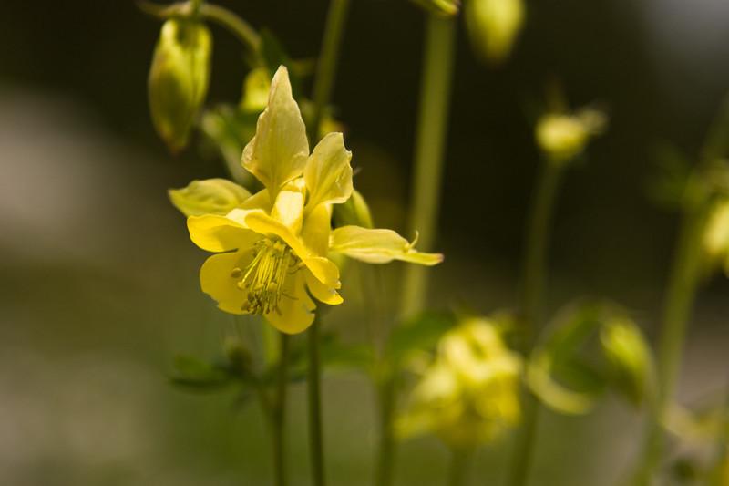 Flower, Banff National Park
