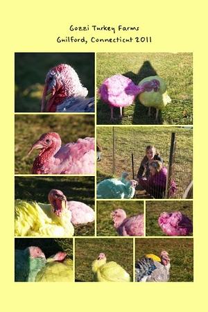 CT, Guilford - Gozzi's Turkey Farms