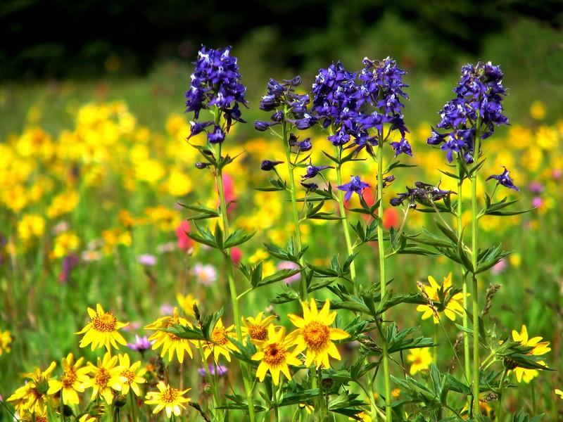 amh FLOWERS (1379).jpg