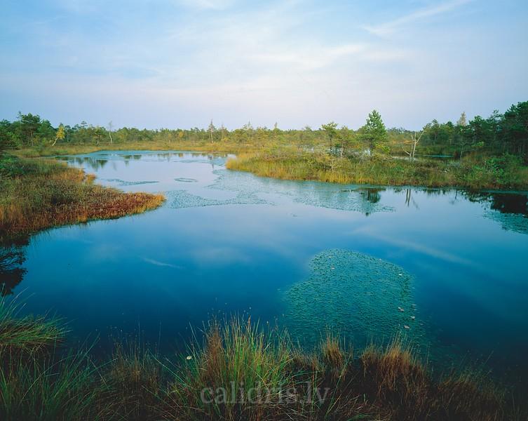 A lake in the Great Kemeri Bog