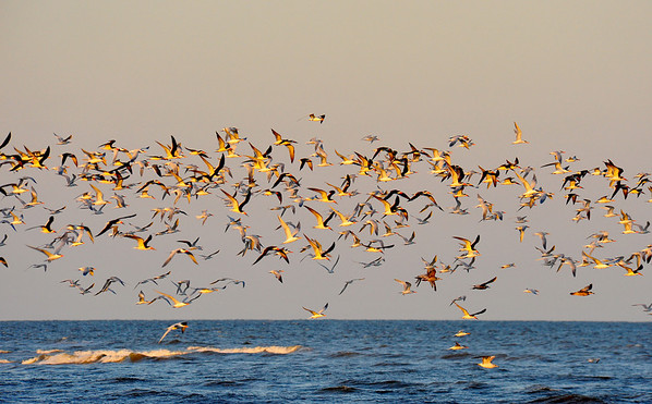 Birds of Gould's Inlet 04-25thru27-09