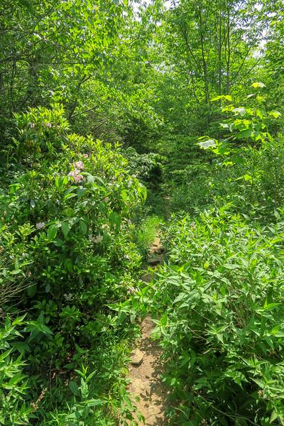 Graveyard Ridge Trail -- 5,470'