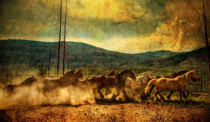 The horses of montana.jpg