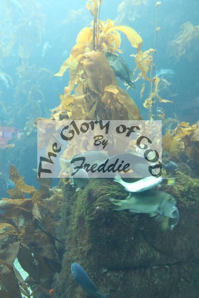 Aquarium 20141.jpg