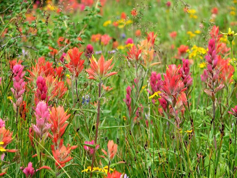 amh FLOWERS (1332).jpg