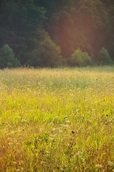 Golden Hazec.jpg