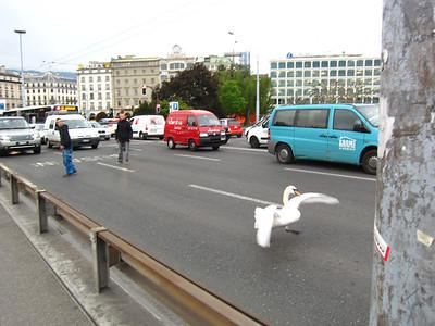 GenevaBlog