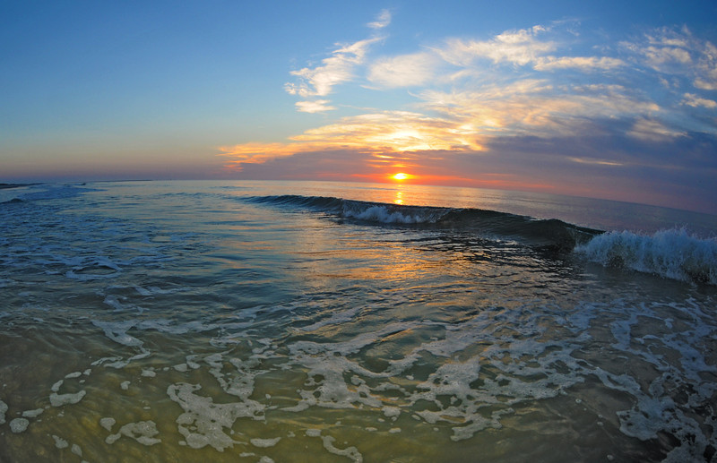 SCOPe_Huntington Beach State Park OCT 2012_9.jpg