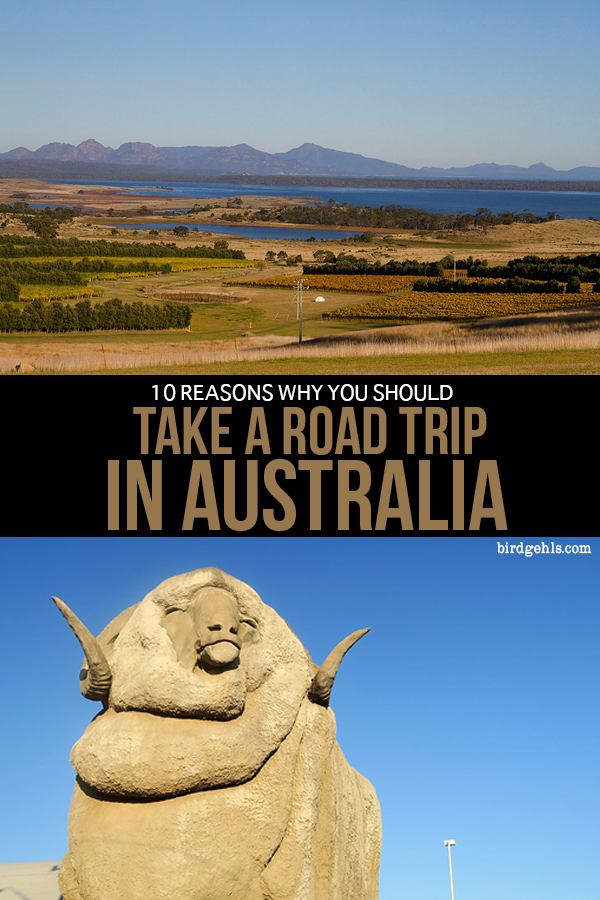 Here are a few reasons why you should take a road trip in #Australia. The views are amazing, you'll spread the tourist dollar around small towns that really need it, you'll have a pretty unique itinerary for Australia and see some quite barmy sights. / Things to Do in Australia / Road Trip Australia /