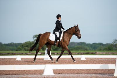 Horse 381