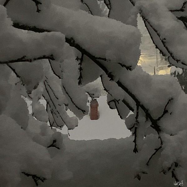 snow morning 2-25-19.jpg