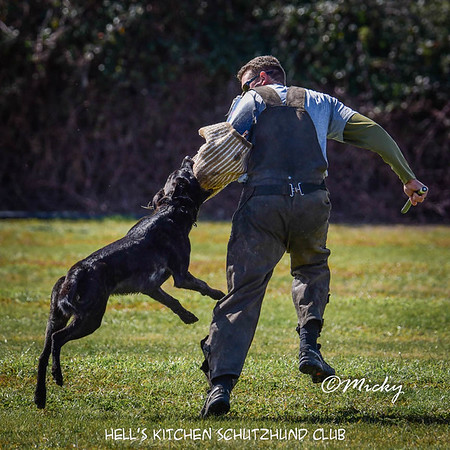 Hell's Kitchen Schutzhund Club Training Days