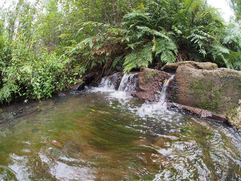 20170527_1457_3927 Mason Falls Picnic Area, near Kinglake