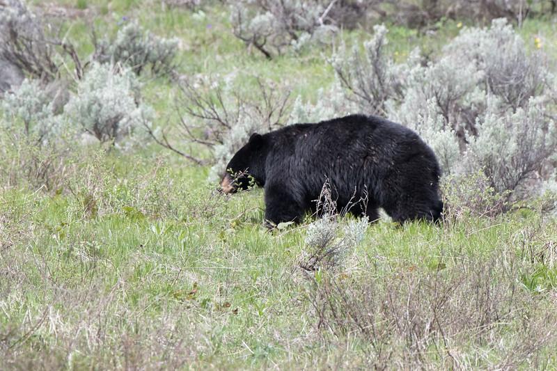 Yellowstone-2838.jpg
