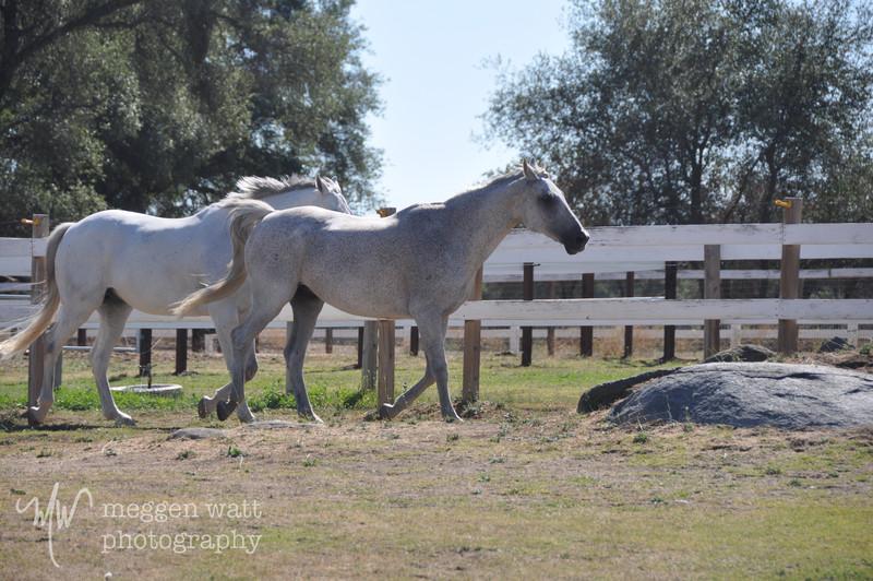 EB&Horses-136.jpg