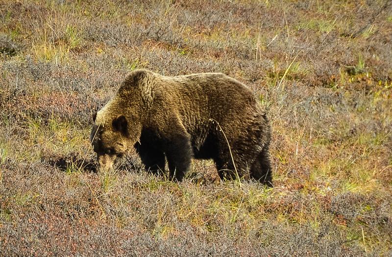 Denali-National-Park-141.jpg