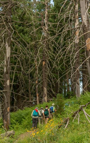 Mt Lemmon Old Growth #10