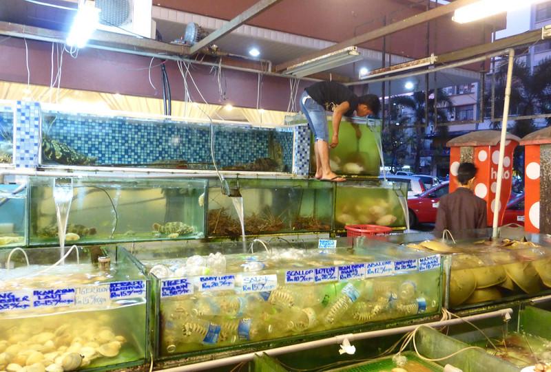 Kota Kinabalu, Borneo (Apr 25-26, 2014)