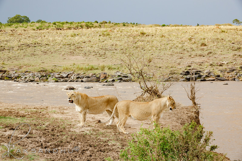 Safari-2ofaKind-026.jpg