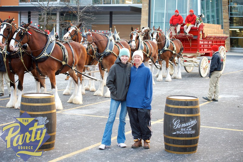Clydesdale Portraits 94.jpg
