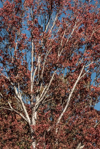across treedone-914b.jpg