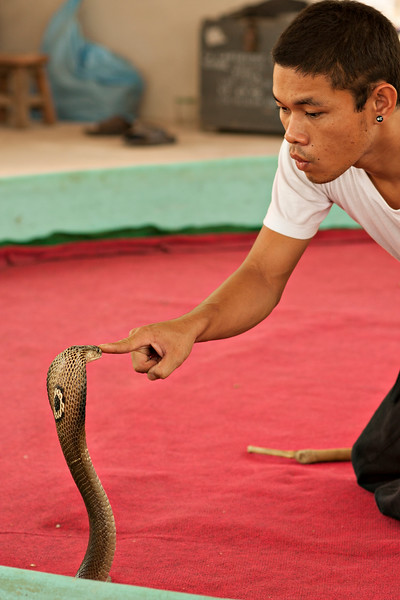 The snake show was pretty entertaining, fiddling with cobras etc.
