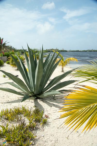 Cancun-5131.jpg