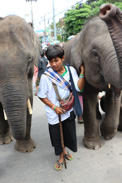 2014-11-14 Surin Elephant Welcome Feast 741.JPG