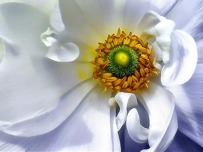 Artistic Florals