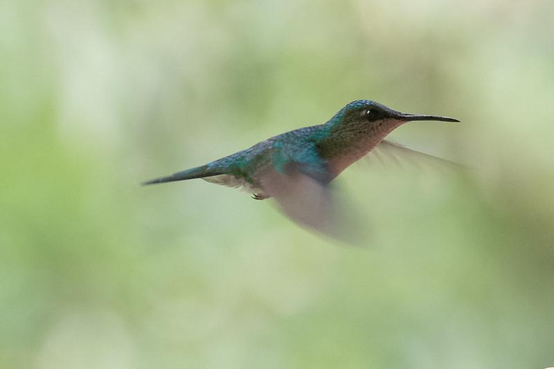 19-Sept Brazil Birds-8167.JPG