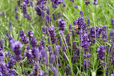 Flowers & Bugs