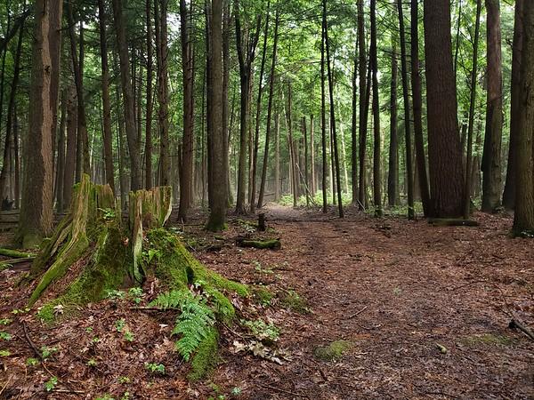 Corduroy Trail