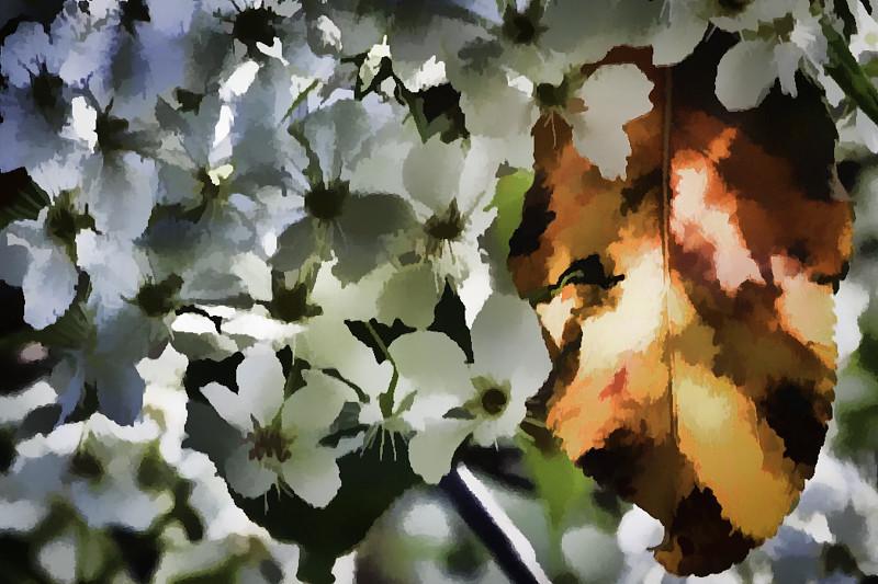 February 11 - Floral design-1.jpg
